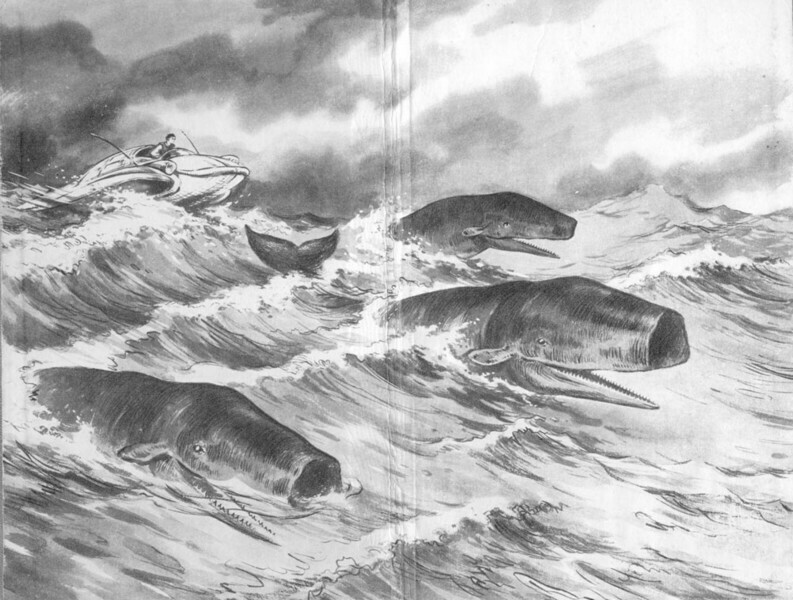 Волны гасят ветер, киты